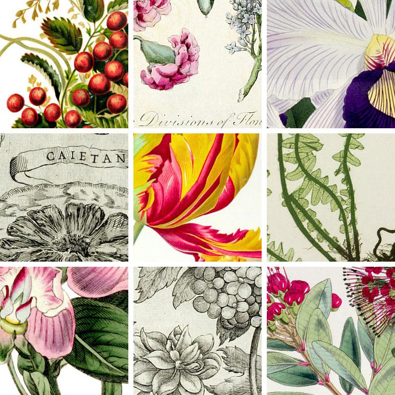 Flowers, Fruit and Foliage